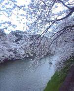060328_chidorigafuti01_1