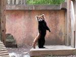 panda0505